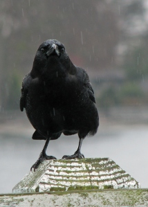 Wet Crow, my alter ego