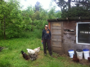 Checking in on the Svensen chickens wearing my super fly sunglasses sent by a friend.