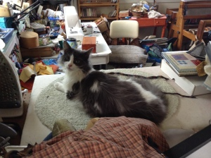 Mr. Sparky in his favorite place to sleep on the messy side of the studio.
