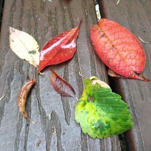the deck is covered in leaves freed by the wind