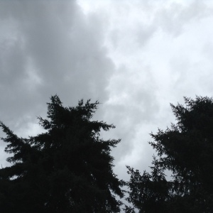 fir and spruce silhouetted against the turbulent sky