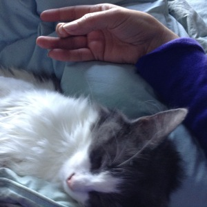 Meditating with cats can be a bit fuzzy on focus.