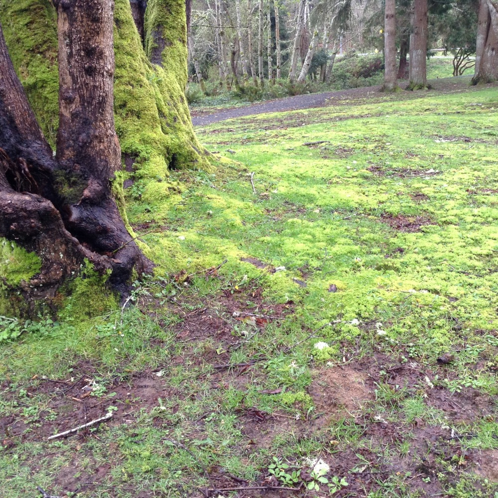 slowing down to the speed of moss