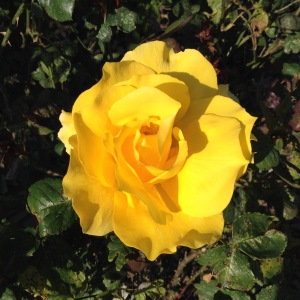 Third Chakra is the solar plexus chakra Color is yellow.