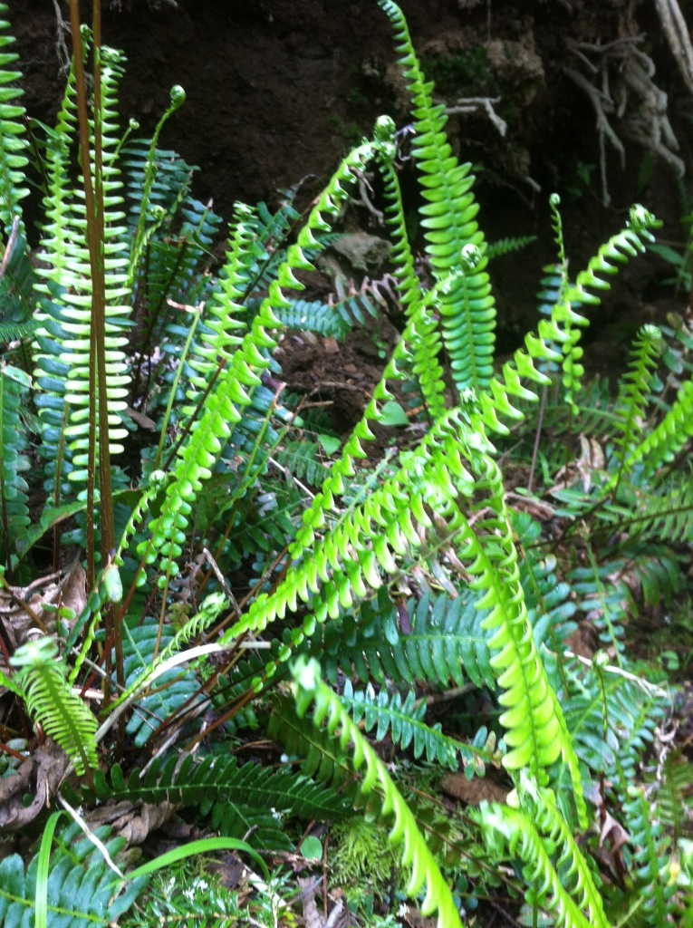 Beautiful deer ferns