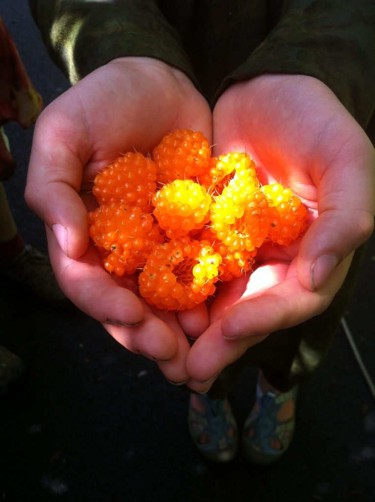 Salmon Berries in a glance of sun last spring.