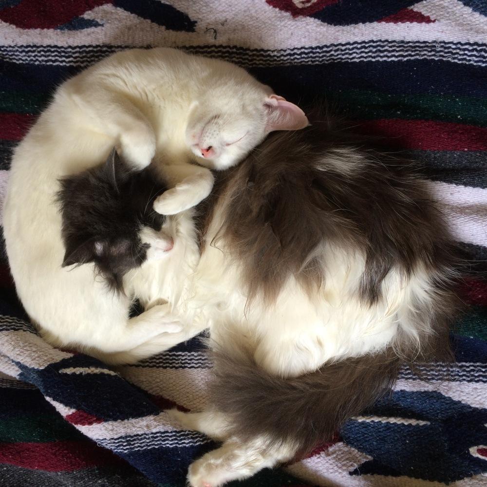 Cat Naps.