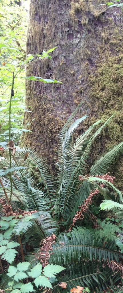 Tree Sentinal